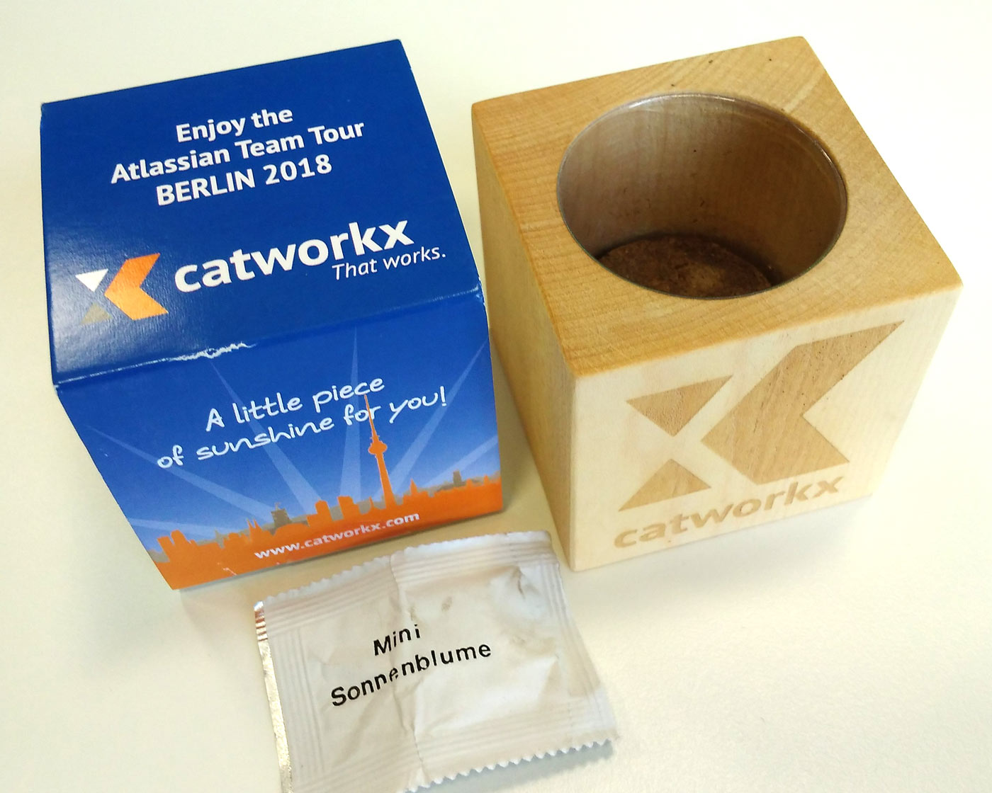 catWorkX grow your own sunflower gift